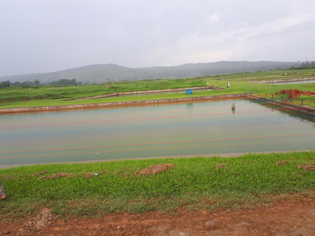Fish farms visit